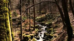 Wanderung durch das Ilsetal